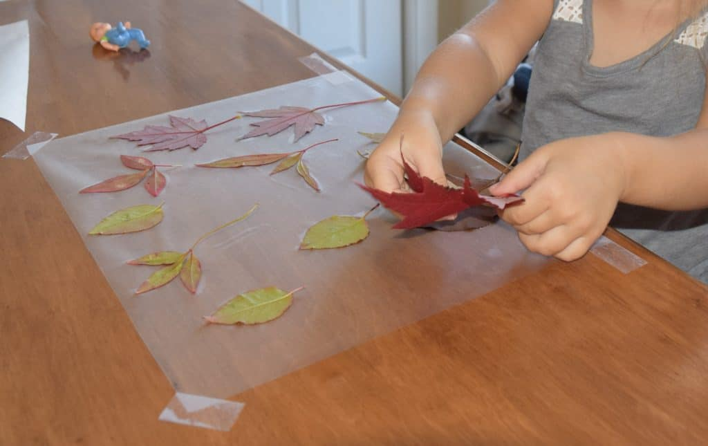 Girl putting a leaf on contact paper to make a fall craft.